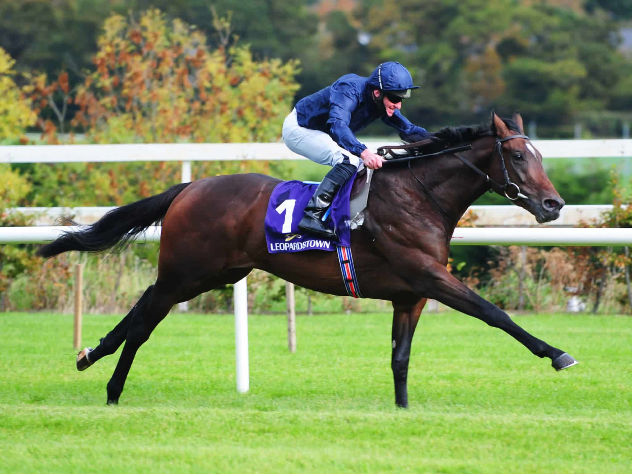 Epsom Derby and Oaks Preview - Horse Racing